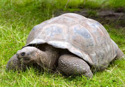 LGBT Galapagos Cruise Turtle
