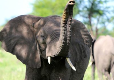 All LGBT Tanzania Safari Tour