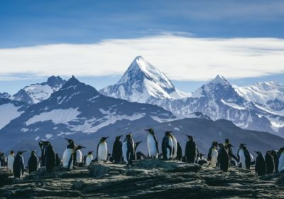 Gay group cruise to Antarctica Brand g