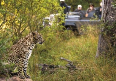 LGBT African Safari
